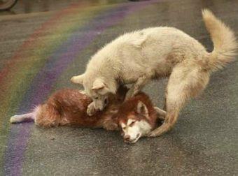 «Просыпайся, брат мой хаски!» Видео о настоящем Собакене