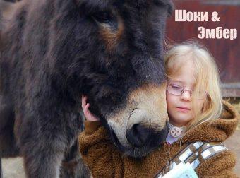 «Они исцелили друг друга…» Спасённый ослик заставил заговорить немую девочку! :)