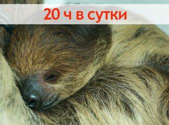 Профессионалы своего дела… или Животные, которые очень любят поспать!!! :)