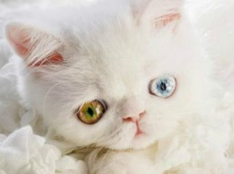 Его глазки смотрят прямо в душу! Потрясающий котенок Пам-Пам, в которого ты влюбишься навек… :)