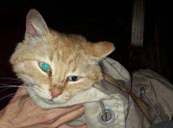 Он спасает котиков! Парень вновь рискнул жизнью, чтобы спасти еще и Рыжика!