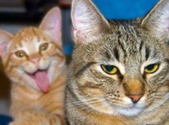 Всем котов! У каждого есть Мурчик, который испортит фото… :)