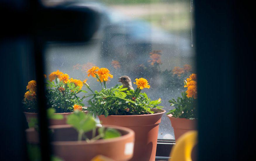 found-blind-baby-sparrow-below-my-balcony-880-14