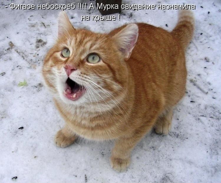 Порция кошачьего позитивчика, которая сделает твой день! Вот это умора!!! :)