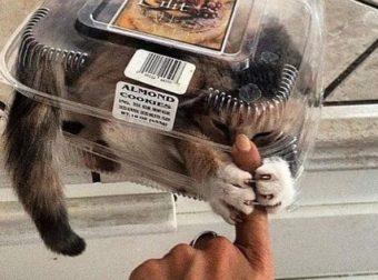 Такие чудики! :) 15 доказательств того, что мурлыки — животные со своими странностями))