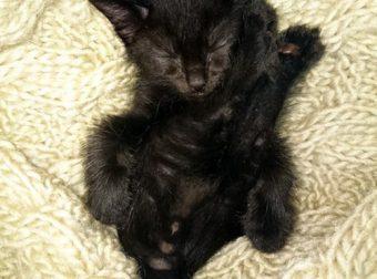 История спасения котёнка с поломанным хвостиком… Нафаня счастлив! ;)