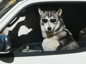 Собаки, которые дадут фору любым шутникам!!! Давай смеяться, м? ;)