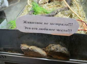 Хочешь посмеяться? Сходи в зоопарк! Весёлые фотографии из царства животных…))