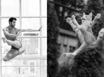 Ох, берегитесь, дамы…)) 16 доказательств того, что мужчины и коты неимоверно похожи!!!