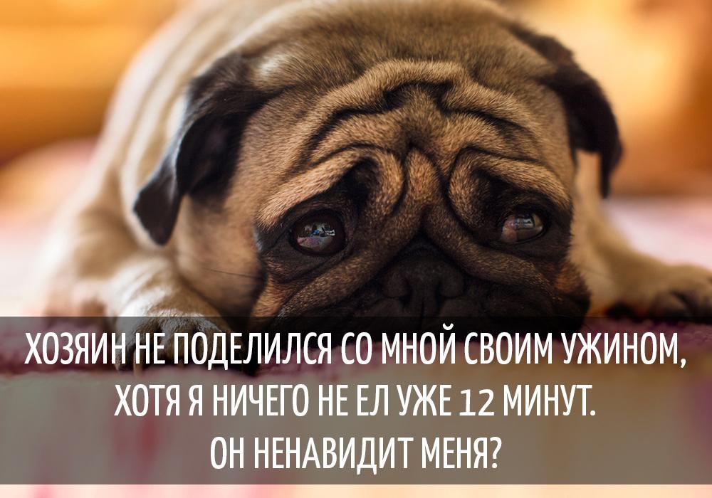 Картинки видио, собака смешные цитаты