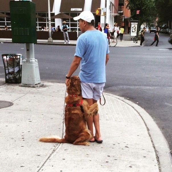 Моя-собака-немножко-бояка... Только не это, хозяин, только не это!!! :) рис 11