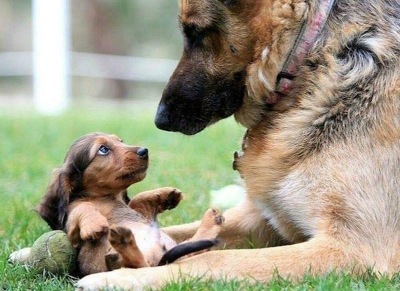 Моя-собака-немножко-бояка... Только не это, хозяин, только не это!!! :) рис 12
