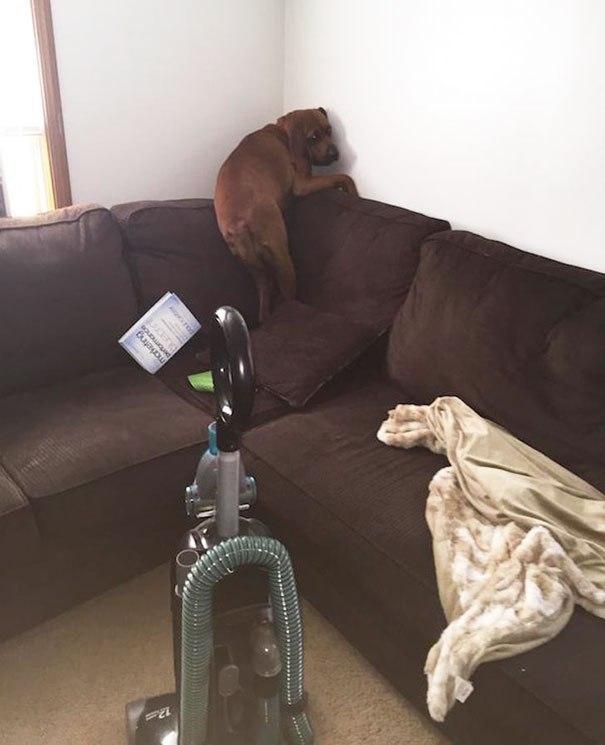 Моя-собака-немножко-бояка... Только не это, хозяин, только не это!!! :) рис 2