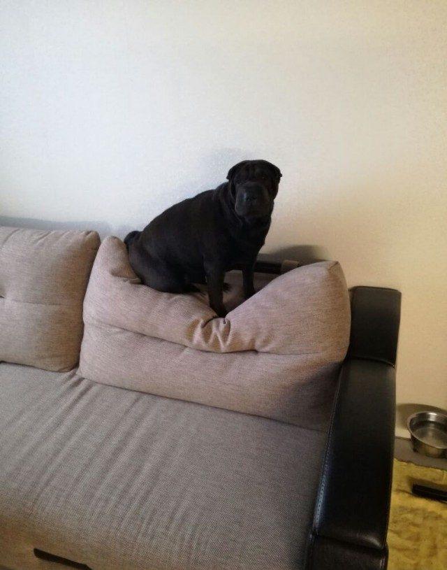 Моя-собака-немножко-бояка... Только не это, хозяин, только не это!!! :) рис 10