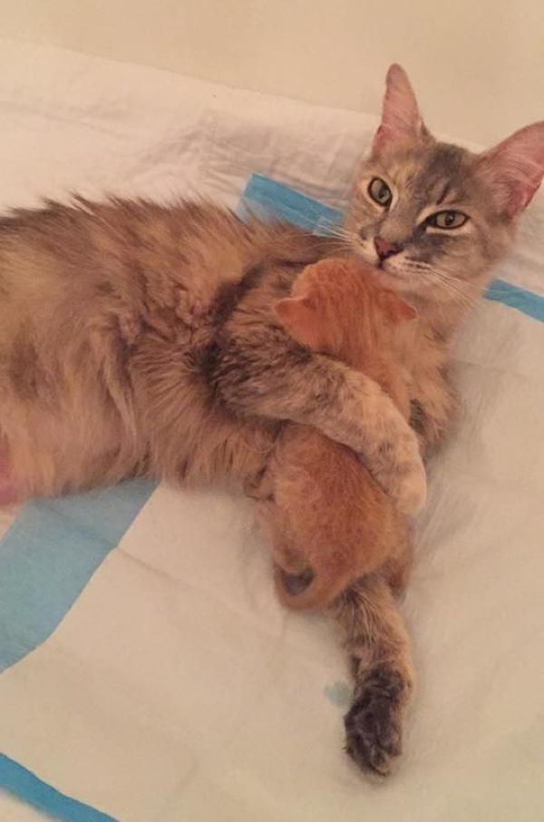 Пламя в янтаре: как кошка и котёнок спасли друг друга от смерти! :)