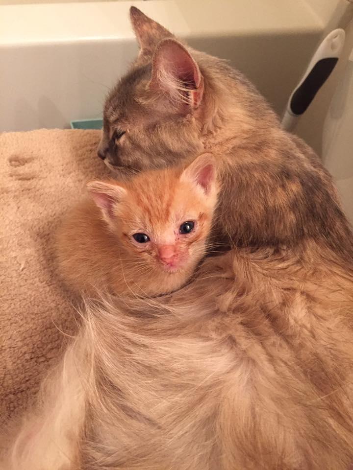 Пламя в янтаре: как кошка и котёнок спасли друг друга от смерти! :) рис 4