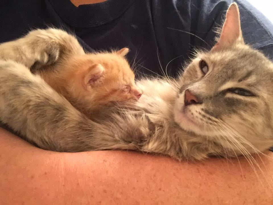 Пламя в янтаре: как кошка и котёнок спасли друг друга от смерти! :) рис 3