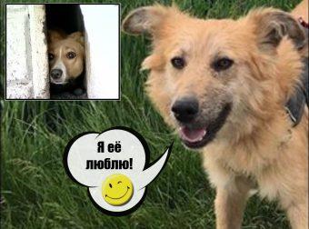 Хабаровская собака, жившая 3 года в щели между домами, нашла своё счастье! :)