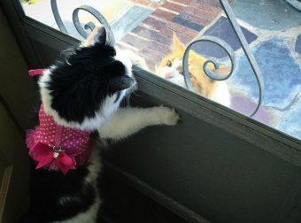 «Здрасте, а Соня выйдет?» Уже два года влюблённый кот зовёт красотку на свидания…