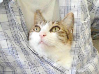 Этот шеф повышает зарплату работникам за… спасение котов! Но потом он поступает с мурчалами ещё круче :)