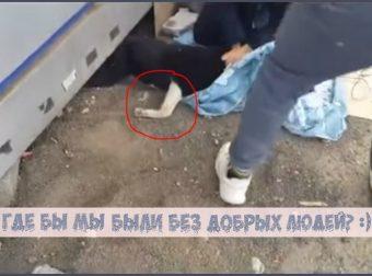 Узник челябинского ларька: спасение пса, который вырос под полом и ходил на коленках…