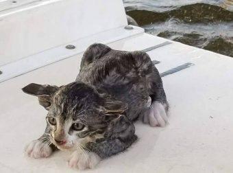 Котёнок летел с моста в реку. Жизнь заканчивалась… Но вдруг из воды выскочил Шанс!