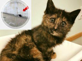 «Ты будешь нашей общей мамой!» Женщина бежала спасать котенка от смерти, но по пути… спасла второго!