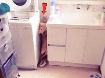 Моя-собака-немножко-бояка… Только не это, хозяин, только не это!!! :)