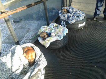 Следующая остановка — Щенячья Радость! Вот что произошло с бездомными собаками на автовокзале Бразилии…