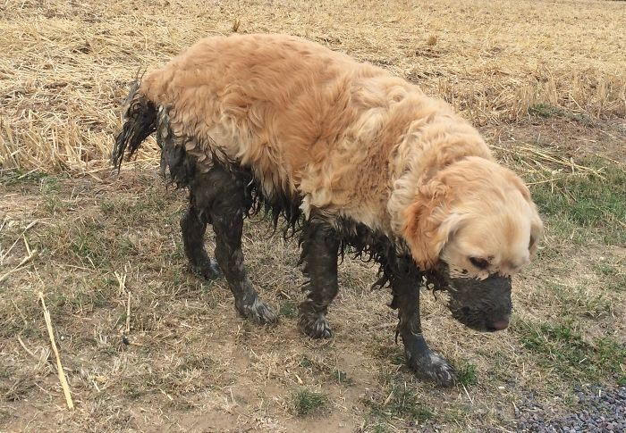Dirty-Dogs-Playing-In-Mud-667-5914686c71e70__700
