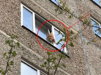 «Кот, ты нам больше не нужен!», — сказали хозяева и бросили его в квартире… Весь двор спасал одинокого питомца!