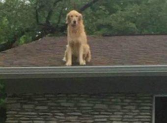 «Мы устали всем объяснять!», — говорили хозяева! Они поставили табличку, чтобы люди поняли, почему пёс сидит на крыше!