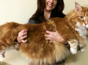 «А что это у вас такое длинное? Ах, это кот…» Самый длинный кот в мире дотянется даже до тебя! :)