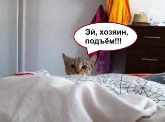 Ох, уж эти негодники! Коты, которые думают, что мир крутится вокруг них))
