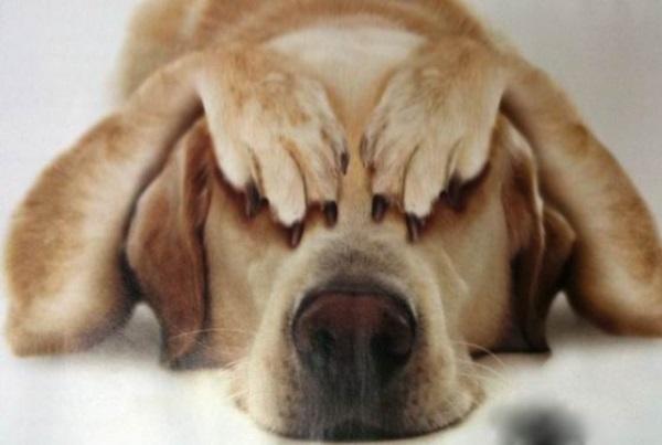 Моя-собака-немножко-бояка... Только не это, хозяин, только не это!!! :) рис 13