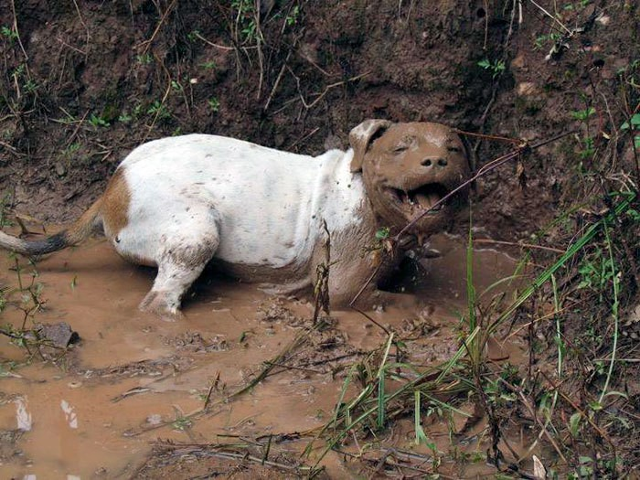 dirty-dogs-playing-in-mud-100-5914578f367ad__700