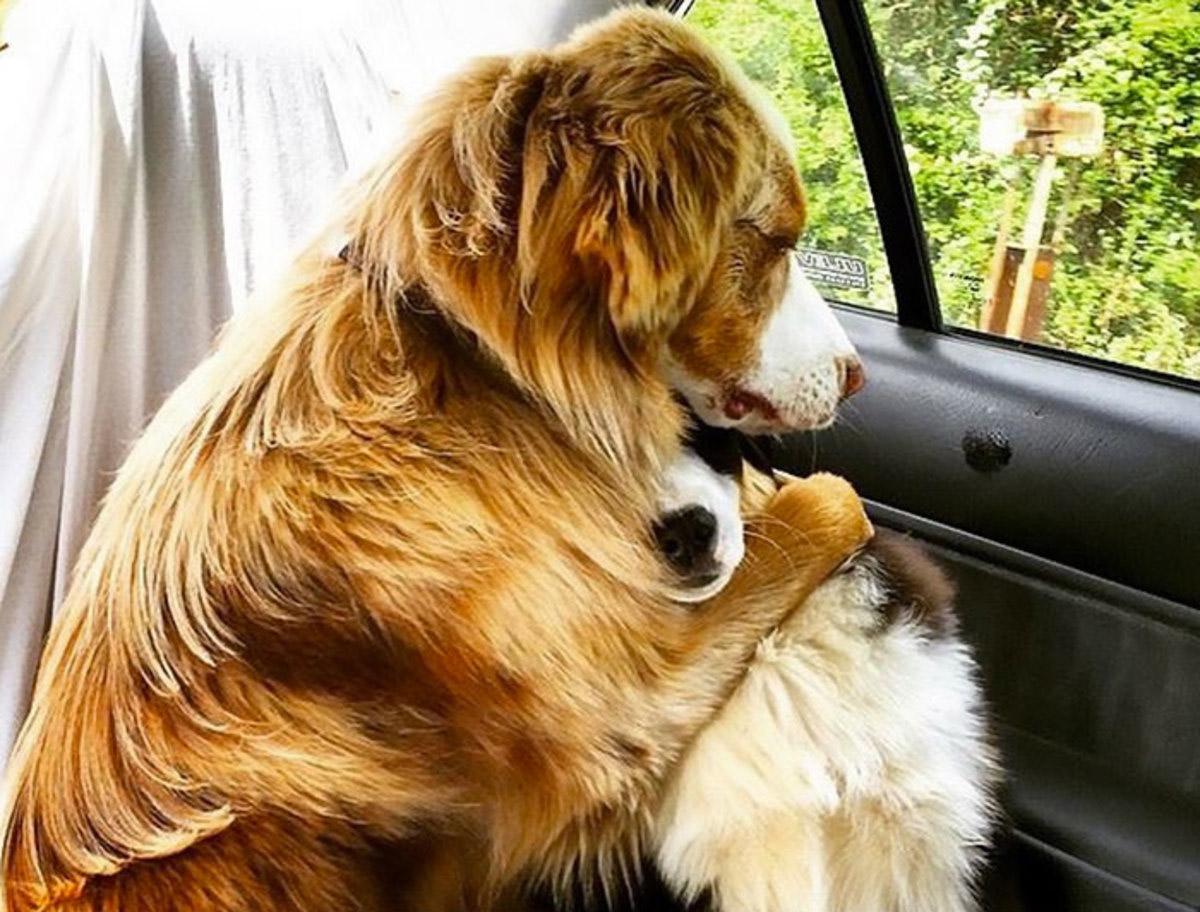 funny-dog-snapchats-1jpg