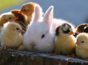 Закадычные друзья, однако)) 17 доказательств, что дружба между животными существует!