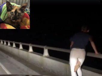 Ночь… Мост… И пушистая незнакомка на краю судьбы! История спасения в последний миг