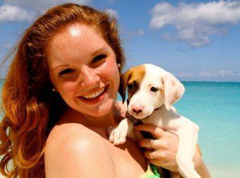 Райское место: остров, где живут милые щенки, которых можно забрать домой! Вот так новость)