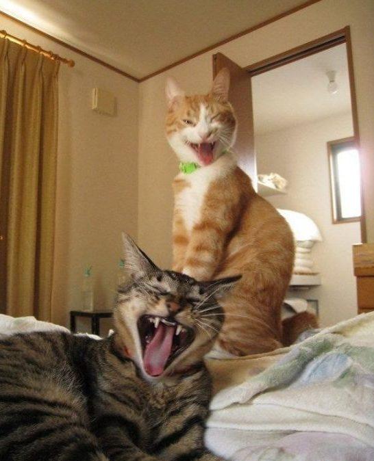 """""""Не виноватый я, оно само!"""" Презабавные коты, которые внезапно... спалились :) рис 4"""