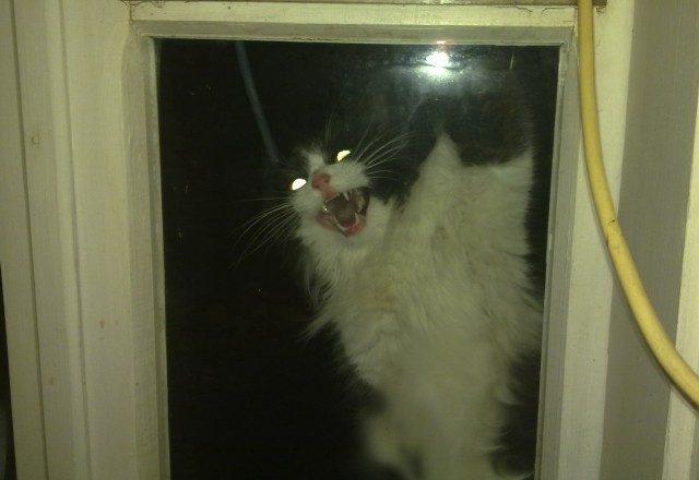 """""""Не виноватый я, оно само!"""" Презабавные коты, которые внезапно... спалились :) рис 18"""