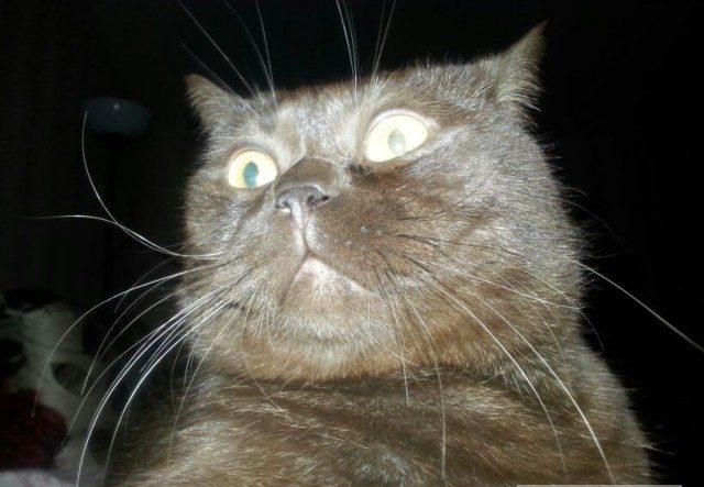 """""""Не виноватый я, оно само!"""" Презабавные коты, которые внезапно... спалились :) рис 19"""