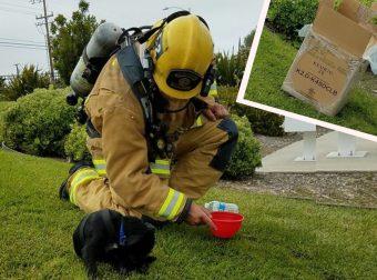 Хозяин просил спасти питомца из огня. Пожарники вытащили его но… это был точно не питомец!