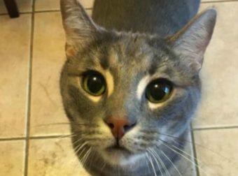 «Присмотрите за моими котиками!» — попросил мужчина… А напоследок он написал о каждом питомце!