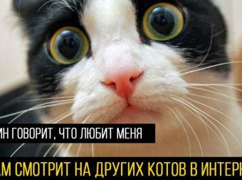 А где-то прямо сейчас грустит котик! 15 причин, по которым МУРлыка может пригорюниться…