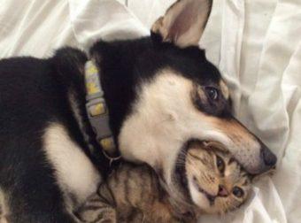 Кто в доме главный? Собаки, которые умеют усмирить наглых МУРлык! ;)