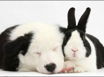 Восхитительные шутки природы! Животные от разных мам, которые похожи словно братья! :)