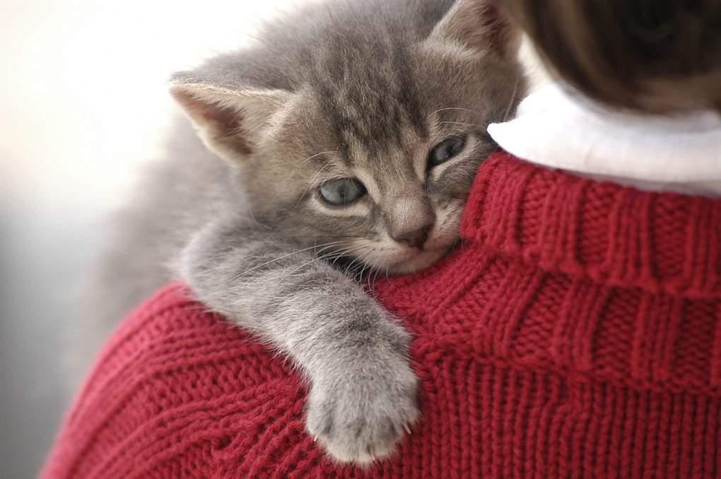 cat-forgiveness