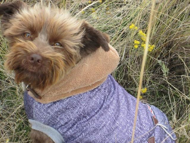 Манюня или Агрессивка: история маленькой собачки рис 2